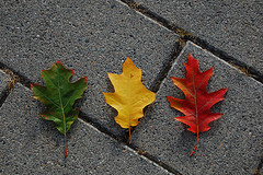 red, yellow, green leaves